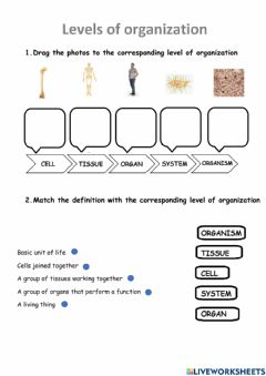 Ficha interactiva Levels of organization of living things