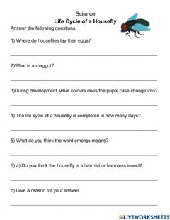 Interactive worksheet Life Cycle of a Housefly